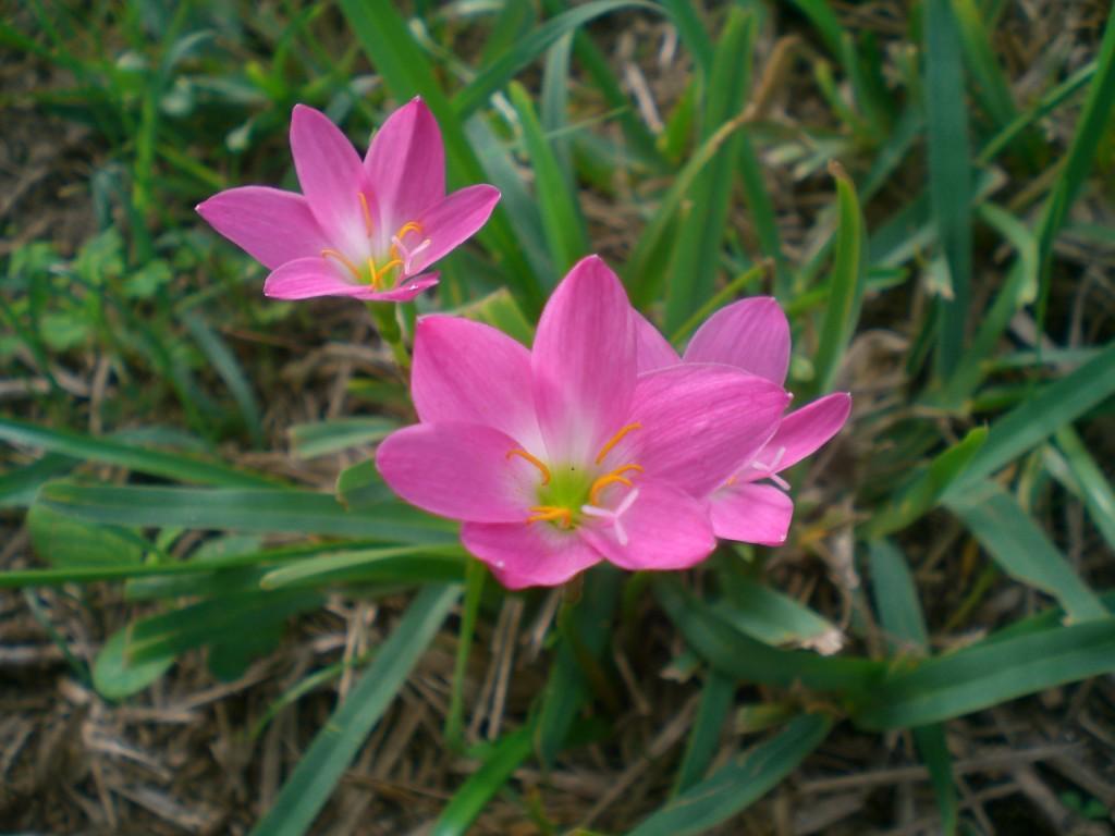 vanliga blommor i sverige