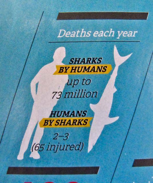 shark vs human
