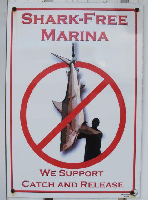 shark free marina