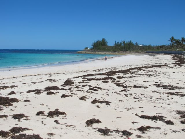 shore thing beach